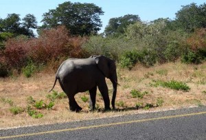 Elefanten3