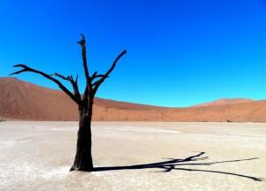 Dött träd i saltpan
