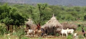 Etiopisk landsbygd
